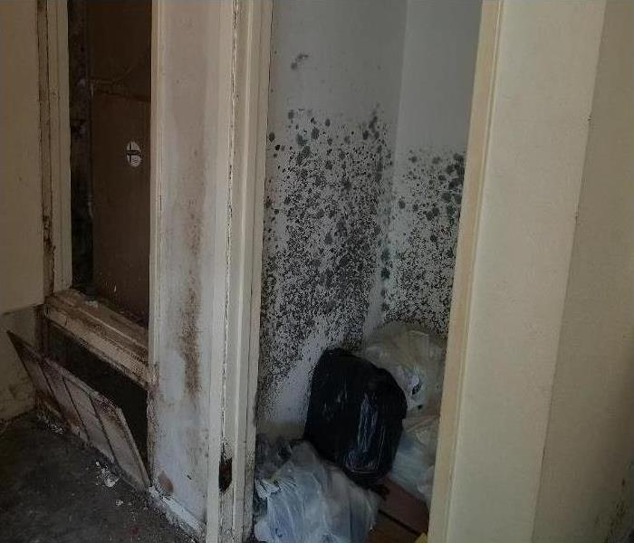MOLD INFESTATION IN GARDEN GROVE Before