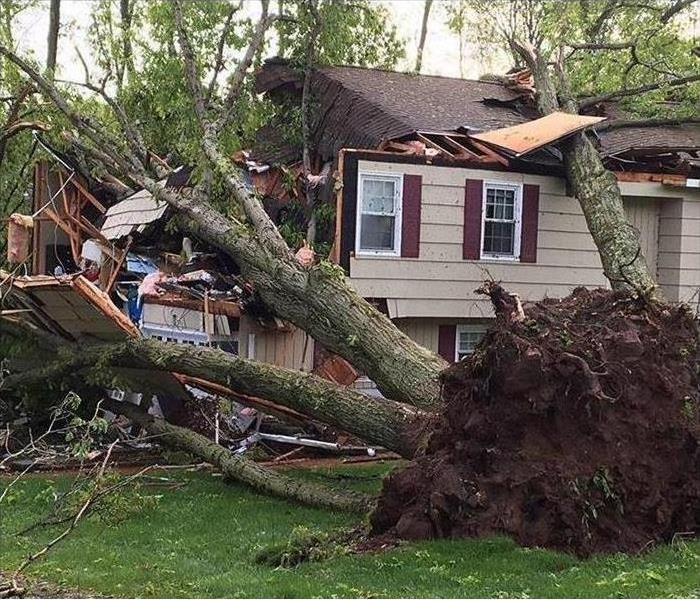 An uprooted tree crashing down on a house